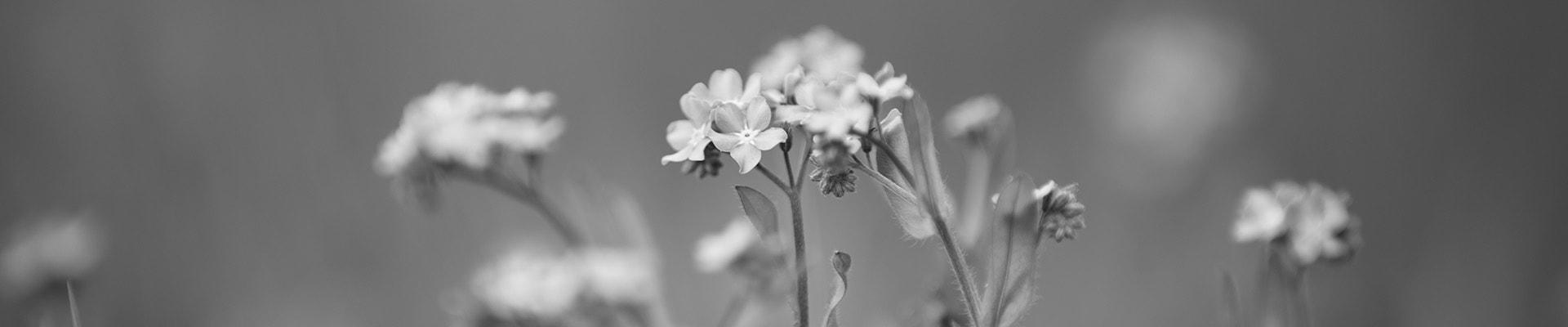 Blommor svartvit